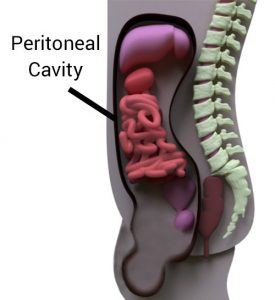 The Peritoneal Cavity